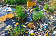 Businesses have the potential to cause serious damage to the environment