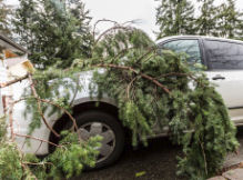 Branches which fall can cause injuries to people and damage to property